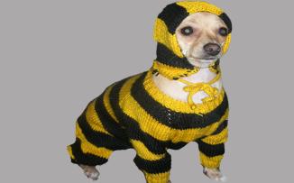 Собака из пчелайна